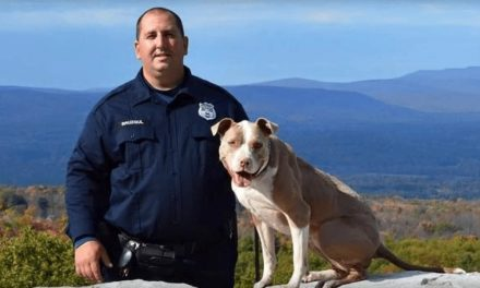 Rescued Dog Becomes Police K9