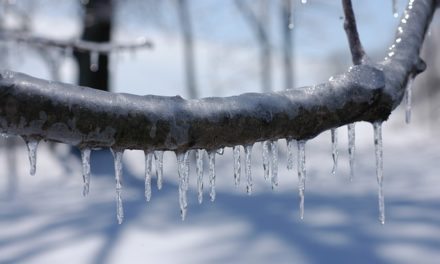 Ice Storms Taking Lives in Midwest