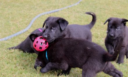 Police Rescue 103 Puppies Ferried in Overturned Truck