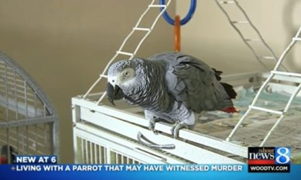 Parrot Mimics Murder Victim's Final Words