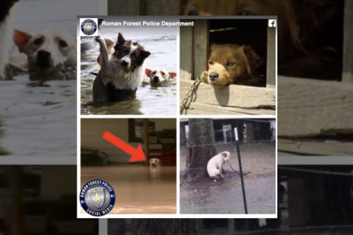 Police Chief Threatens Dog Owners Leaving Pets Tethered During Hurricane Harvey