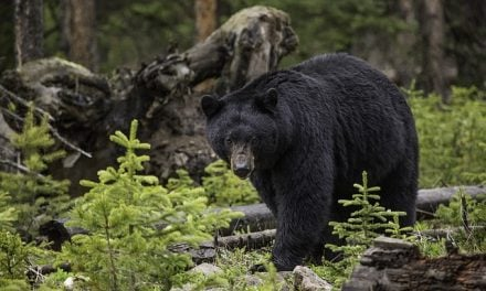 Man overdosed on meth before being eaten by bear at national park