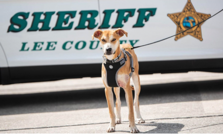 Dog found with mouth taped shut gets deputized