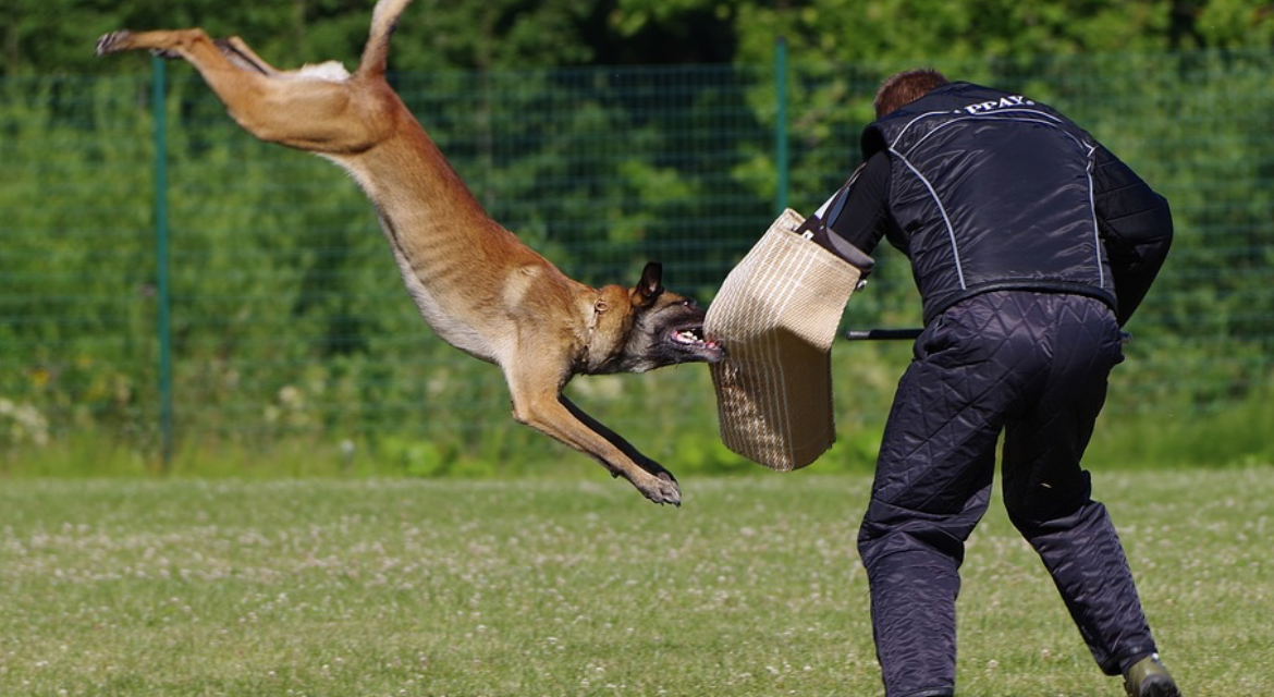 When it comes to picking your partner: Which K9 do you choose?