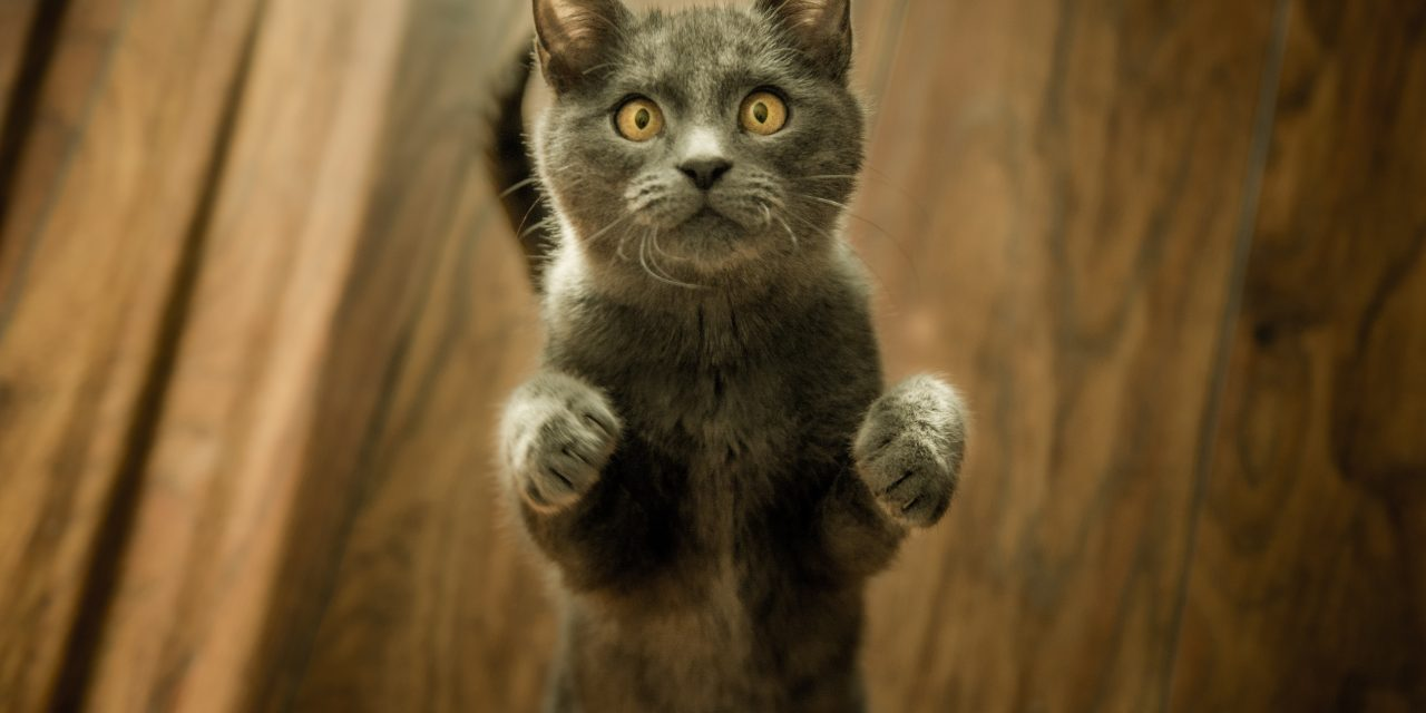 Cats are being trained as police drug detection felines