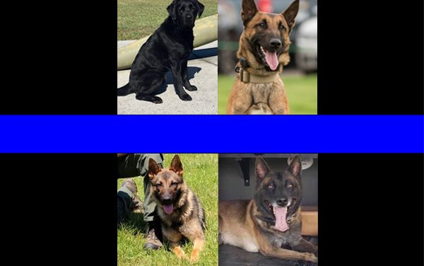 Heroes Down: There Have Been Five K9 Line Of Duty Deaths So Far In 2019