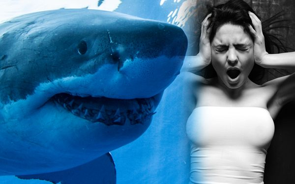 """Woman complains to cop about """"offensive"""" shark related items at Cape Cod store. Chain pulls all products."""