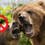 Congressman's new law would punish anyone who shoots a grizzly bear