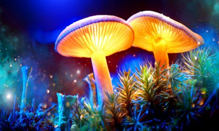 Denver wants to decriminalize magic mushrooms.  What could possibly go wrong?