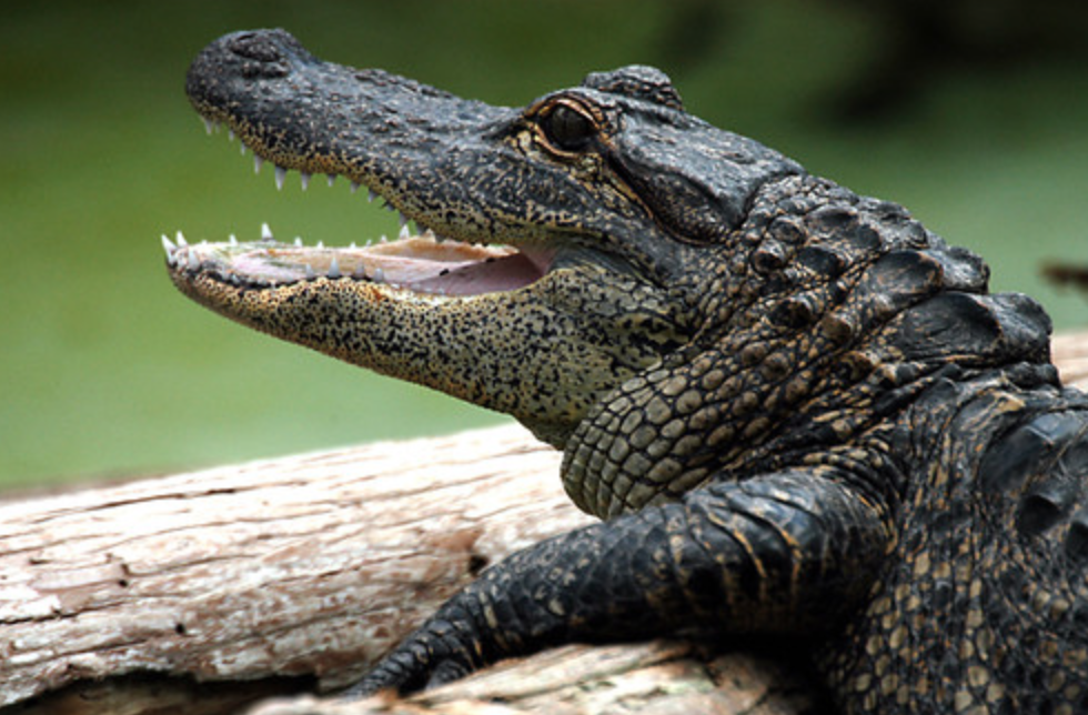 """Police: stop flushing drugs down the toilet, you're creating """"meth-gators"""""""
