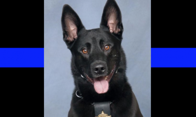 K-9 killed by deputy during foot pursuit