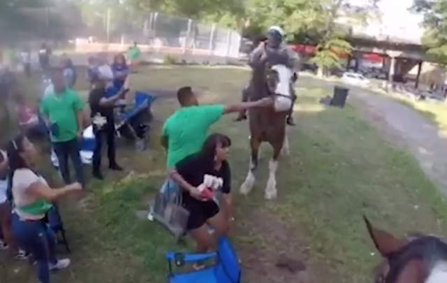 Watch: Man strikes department horse in the face. Why are there no charges?