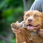 Judge explodes on convicts during sentencing over dogfighting