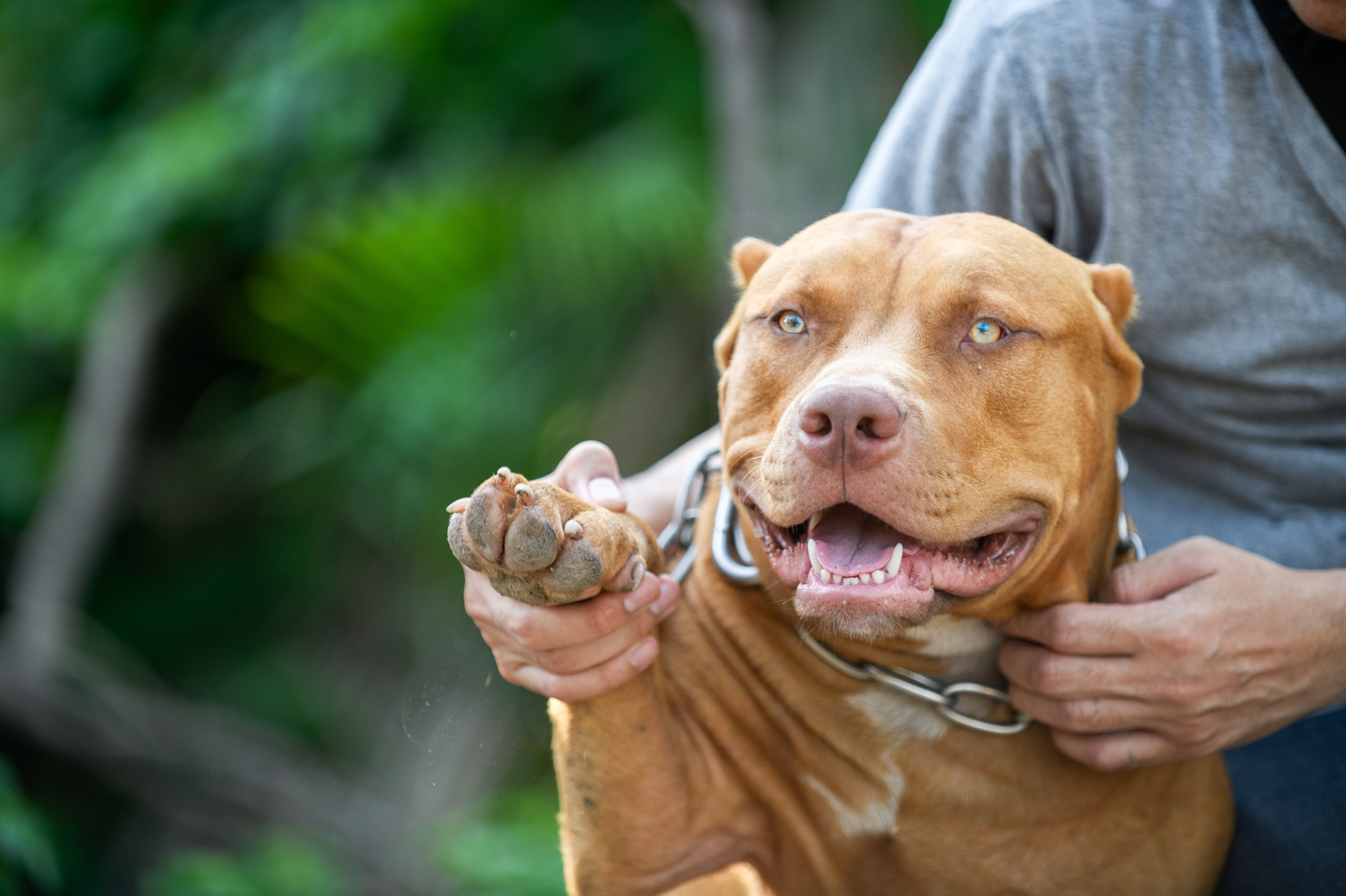 Judge comes down on dog fighting