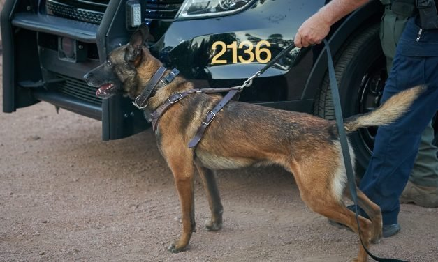 Arizona K9 makes the ultimate sacrifice protecting fellow officers