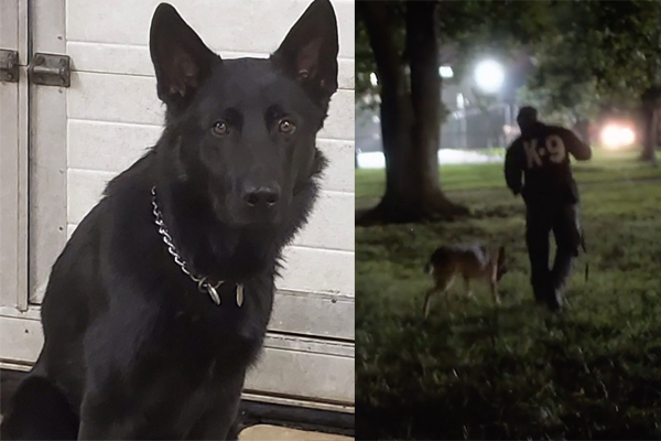 Police K-9 hunts down teens accused of breaking into home and shooting homeowner in the face
