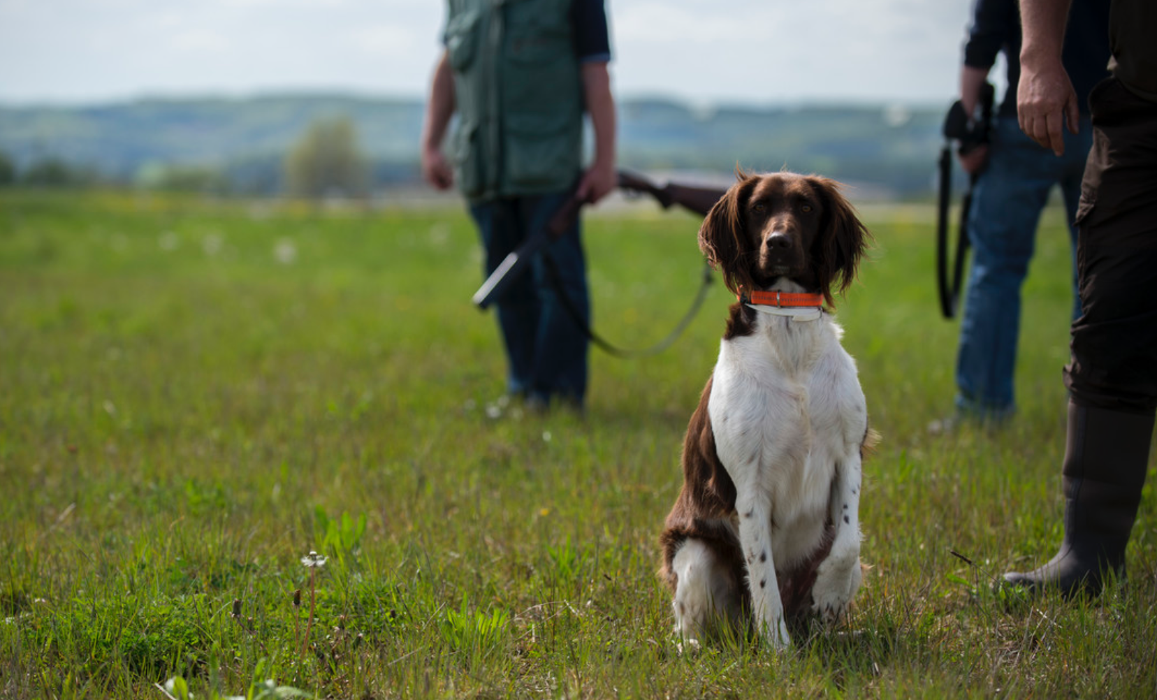 East coast unveils new laws aiming to outlaw hunting dogs, shooting ranges