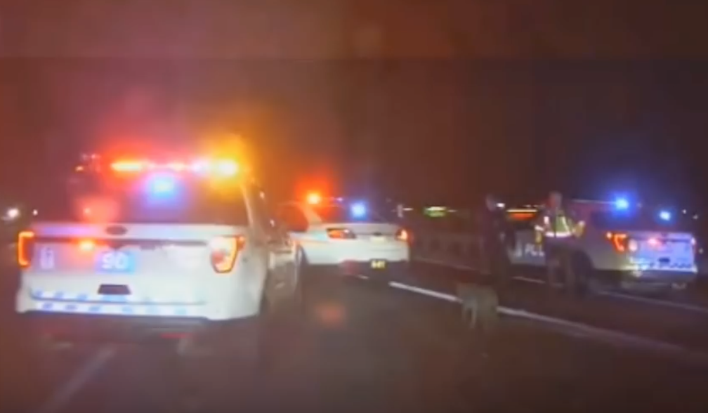 Video: Group of officers attacked on highway - by a lone wild coyote.