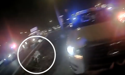 Video: Group of officers attacked on highway – by a lone wild coyote.