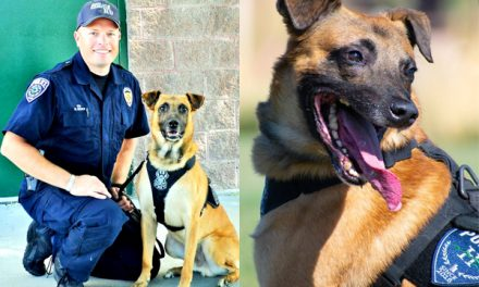 Officer Down: Police K-9 Hondo murdered while chasing wanted fugitive
