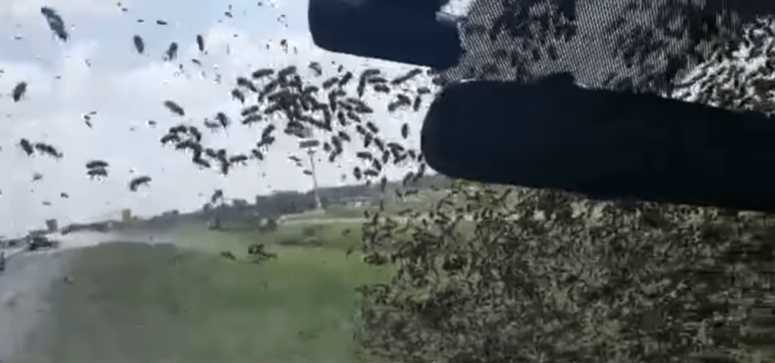 Screenshot of YouTube video showing bee attack in separate incident