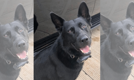 Police K-9 stabbed in the head during hostage situation