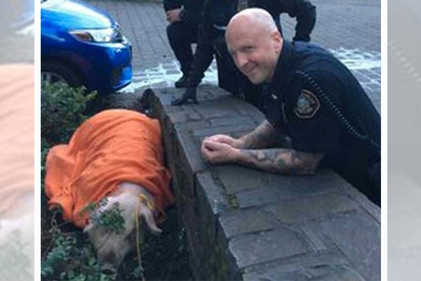 Portland Police rescue pig set to be slaughtered by rioters: 'They were trying to send a message to cops'