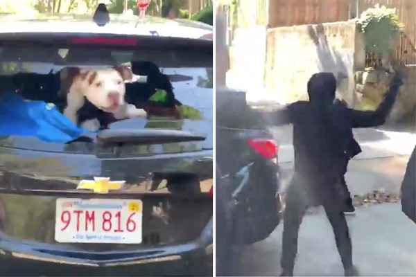 Watch: Rioters smash in car with owner, dog inside - turns out driver was also Anti-Trump protestor