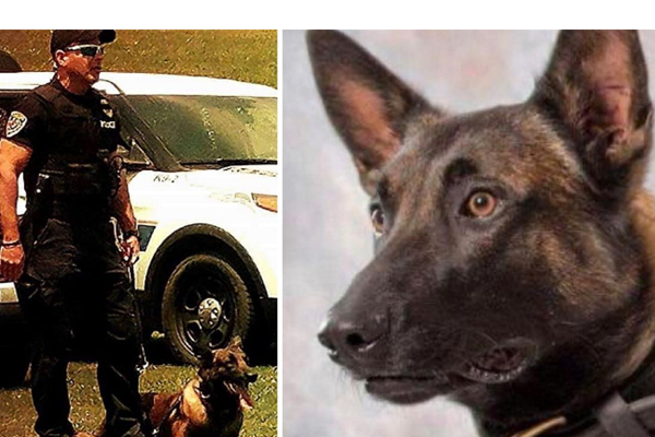 K-9 officer killed in the line of duty during search for suspects