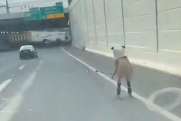 Naked man with giant Panda head seen roller skating on Ohio highway