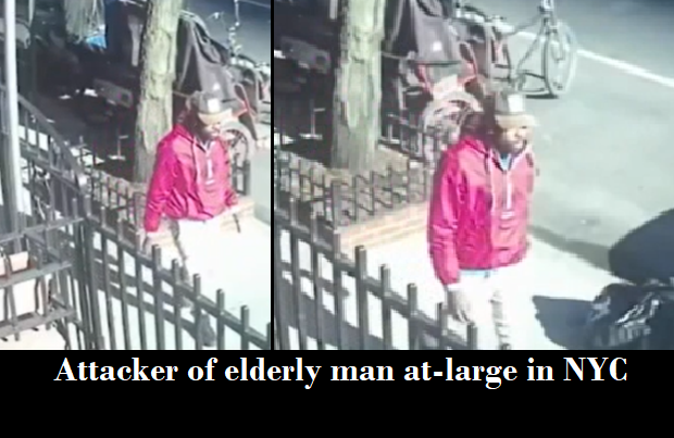 Video: Police searching for assailant who shoved down elderly man