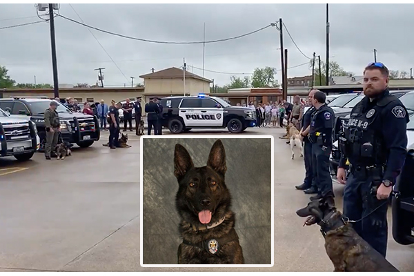Teen robbery suspect charged in fatal beating of police K9 after armed robbery