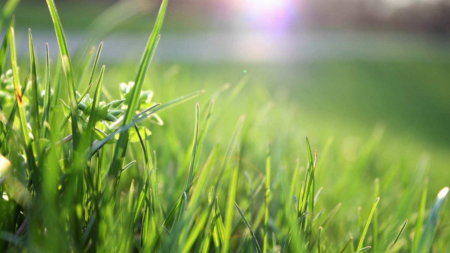 Federal judge upholds ruling for city that fined an elderly man $30K for uncut grass while taking care of dying relative