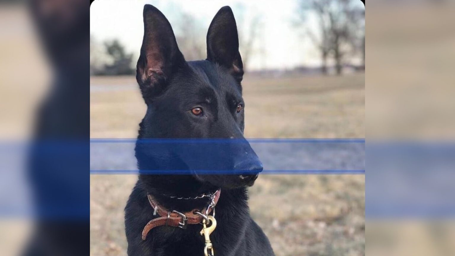 Fallen Hero: K9 Officer Max shot and killed after police respond to domestic violence call