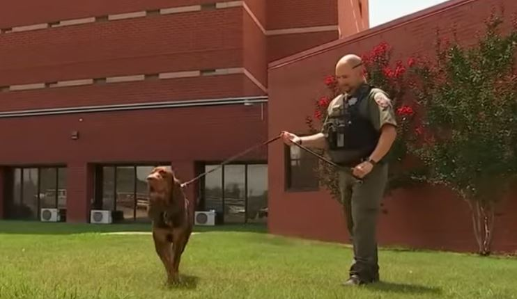 Good boy! Sheriff's department K9 saves child, tracks missing girl to shed in Tennessee