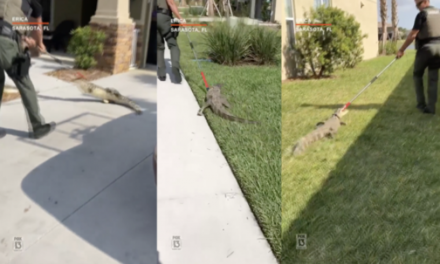 Video: Deputy Wrangles Alligator from Florida Garage