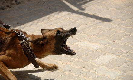 New Law Enforcement Training Program to Reduce Animal Injury in Police Encounters
