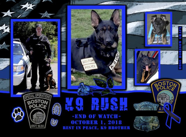 Two Police K9s Die in Separate Incidents