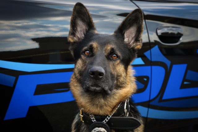 Police returned fire taking out gunman who killed K9