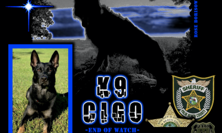 K9 Cigo Killed Saving Lives