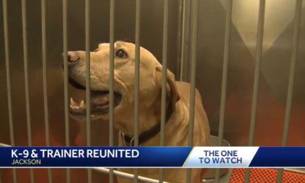 K9 handler reassigned after surrendering retired dog to shelter