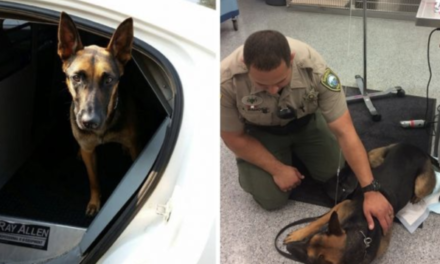 Narcan kit saves K9 after exposure to heroin in jail
